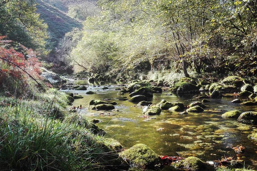 rio casaño
